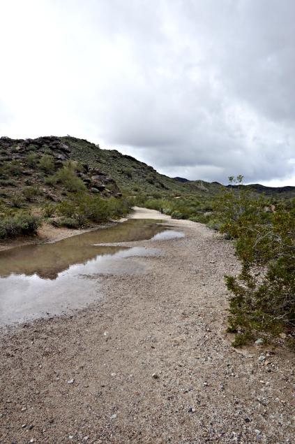 rain-puddle-trail